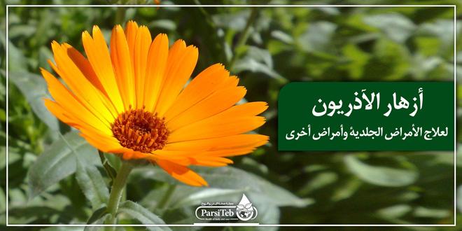 أزهار الآذريون لعلاج الأمراض الجلدية وأمراض أخرى