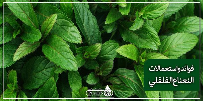 بيع الأعشاب الطبية -بيع النعناع الفلفلي