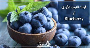 فوائد التوت الأزرق أو Blueberry