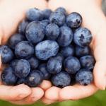 العنب البري أو التوت الأزرق