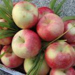 تناول التفاح اليومي