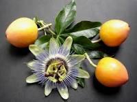 لعاج الأمراض المختلفة بزيت فاكهة الزهرة الآلامية أو الماراكوجا