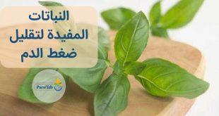 النباتات المفيدة لتقليل ضغط الدم