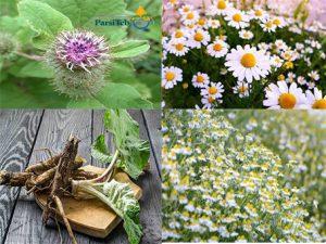 علاج الصداع النصفي بالأعشاب الطبية- علاج الصداع النصفي بالبابونج والأرقطيون