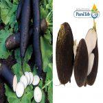 الفجل الأسود من ضمن 10 مواد غذائية طاردة للسموم من الجسم