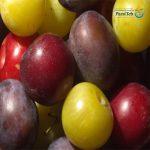 13 فاكهة لحرق الدهون-البرقوق