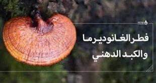 فطر الغانوديرما والكبد الدهني-الجانوديرما والكبد الدهني