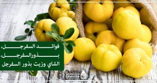فوائد السفرجل، بذور، شاي الزهور والبراعم وزيت بذور السفرجل
