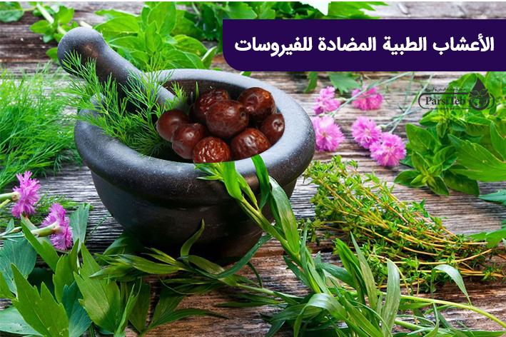 الأعشاب الطبية المضادة للفيروسات الوقاية وعلاج الكورونا في الطب الشعبي