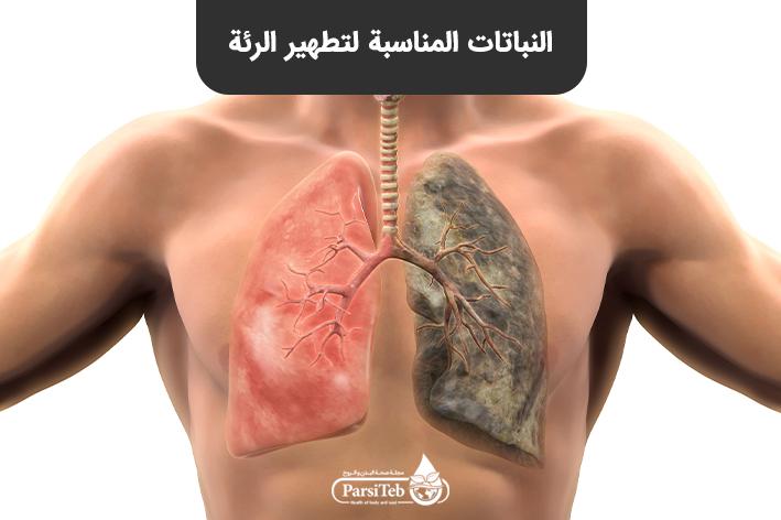النباتات المناسبة لتطهير الرئة
