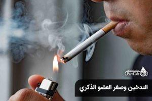التدخين وصغر العضو الذكري